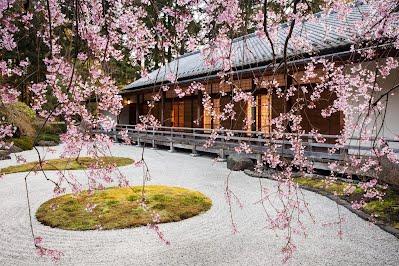 Portland USA Japanese Garden Sakura